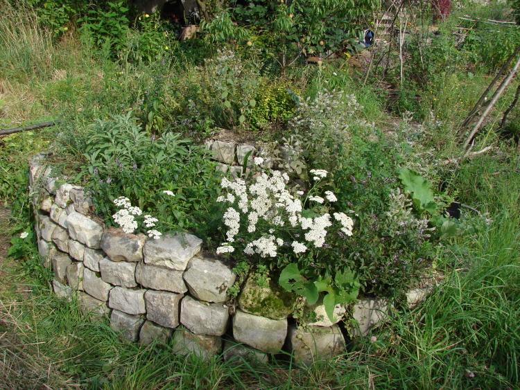 les aromatiques au jardin et la r colte des graines les jardins du loup. Black Bedroom Furniture Sets. Home Design Ideas