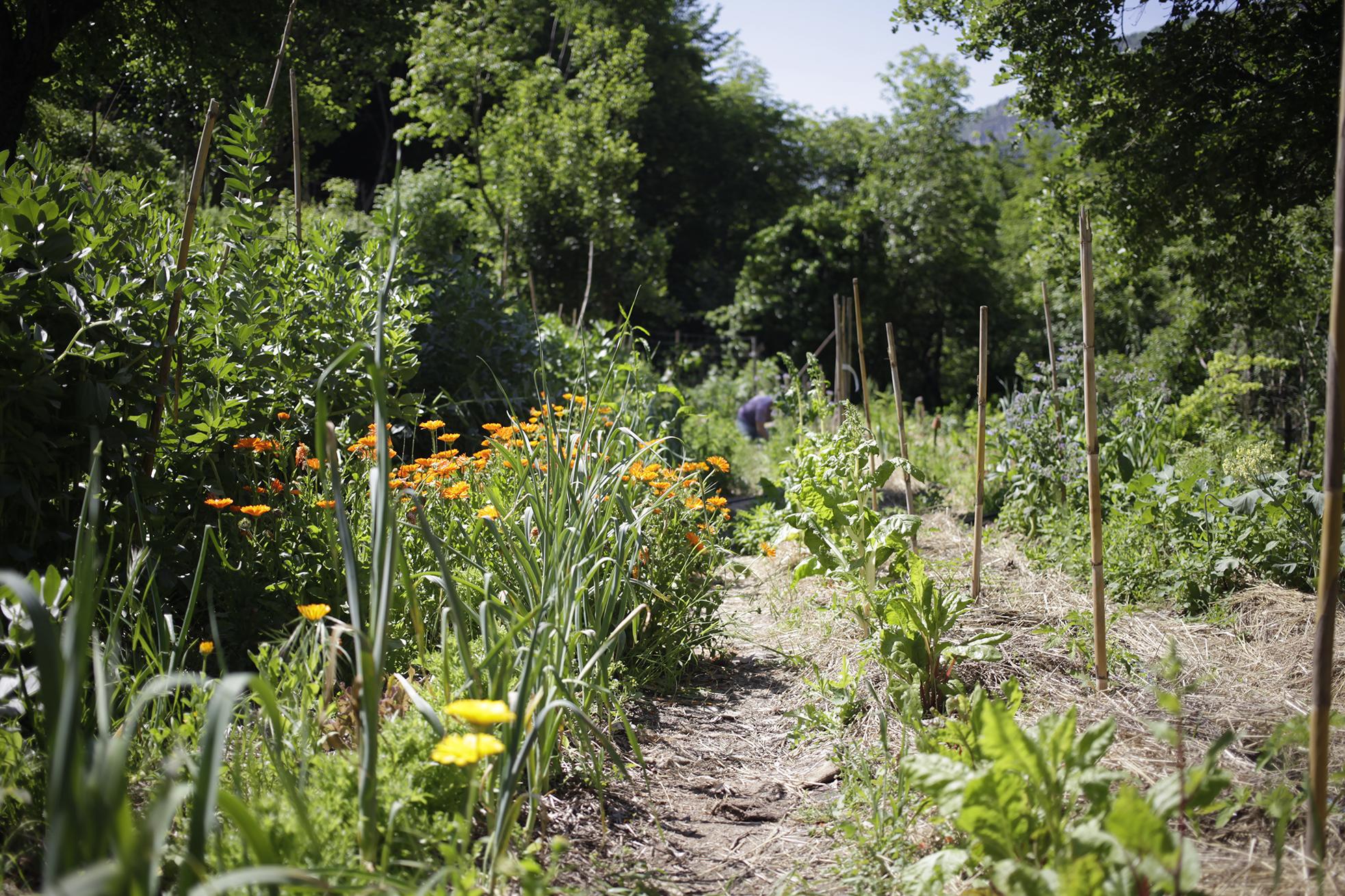 Les jardins du loup association pour le d veloppement for Jardin urbain permaculture