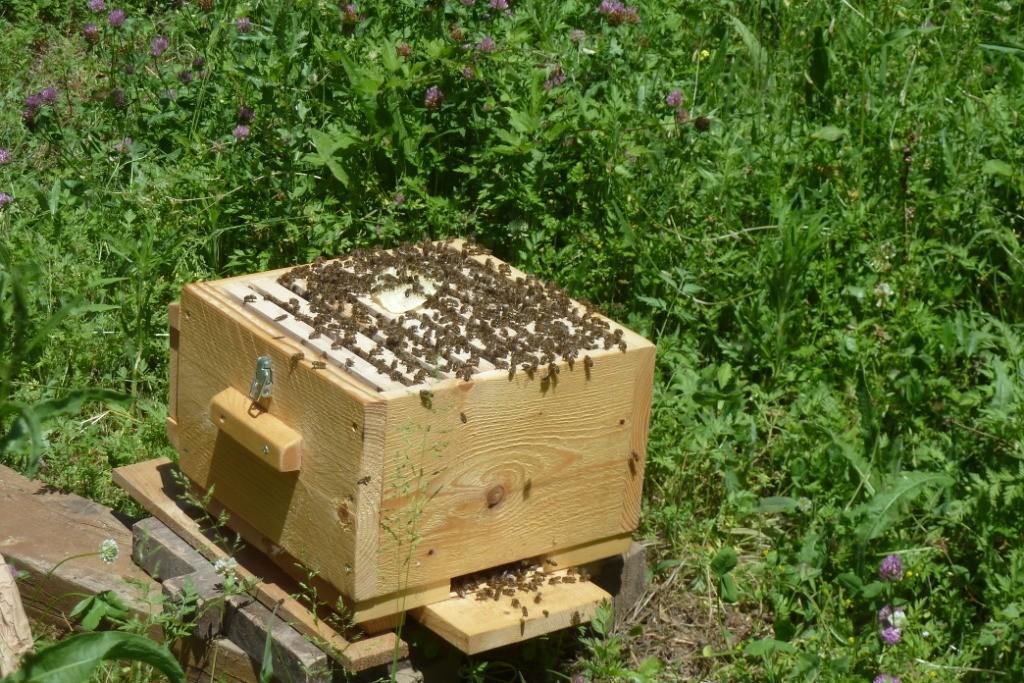 ruche warre et abeilles