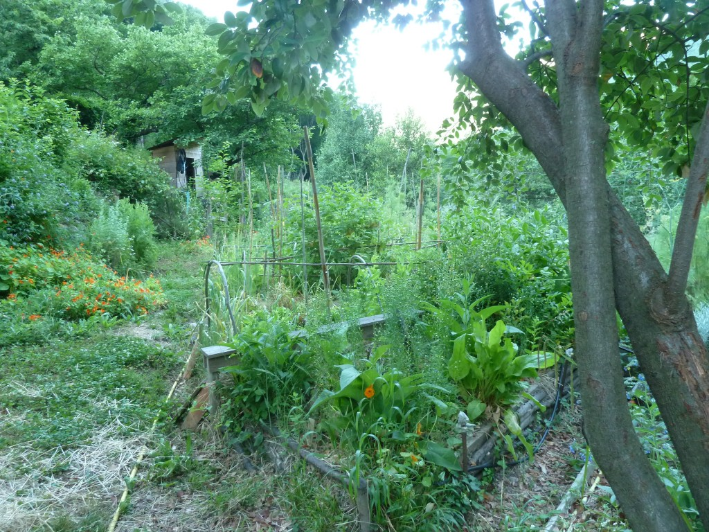 Bienvenue dans mon jardin au naturel les jardins du loup for Le jardin naturel lespinasse