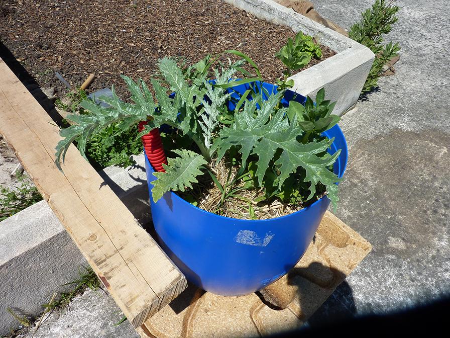 bidon plante