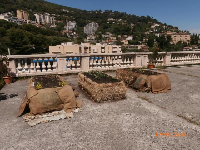 bottes plantées martelly