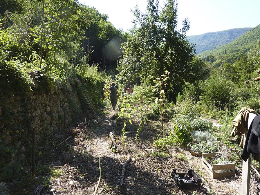 Jardin synergique