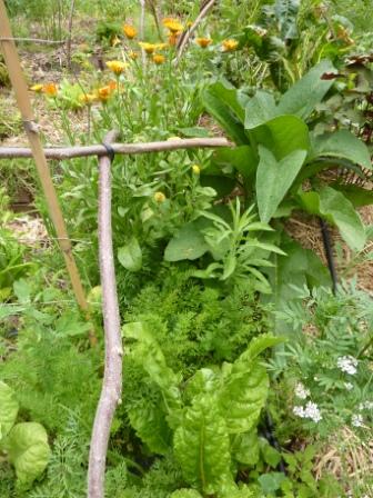 jardin 2012
