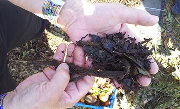 matiere organique en decomposition