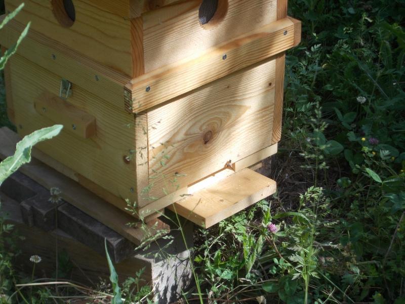 Entre ruche